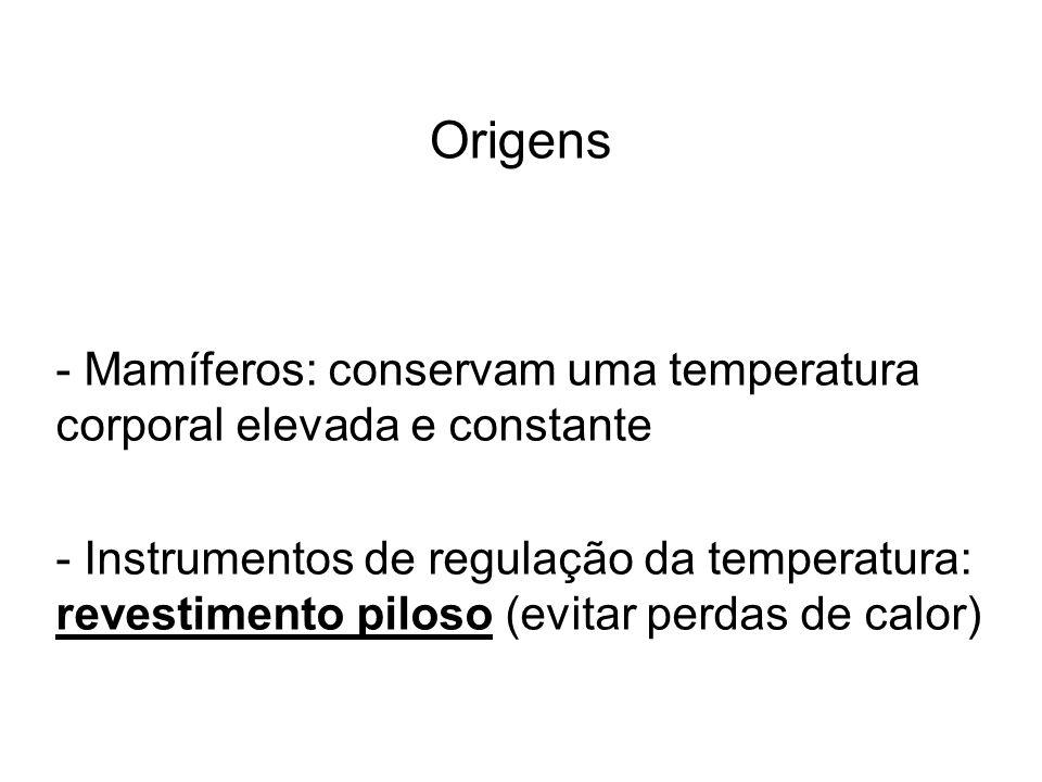 Origens Mamíferos: conservam uma temperatura corporal elevada e constante.