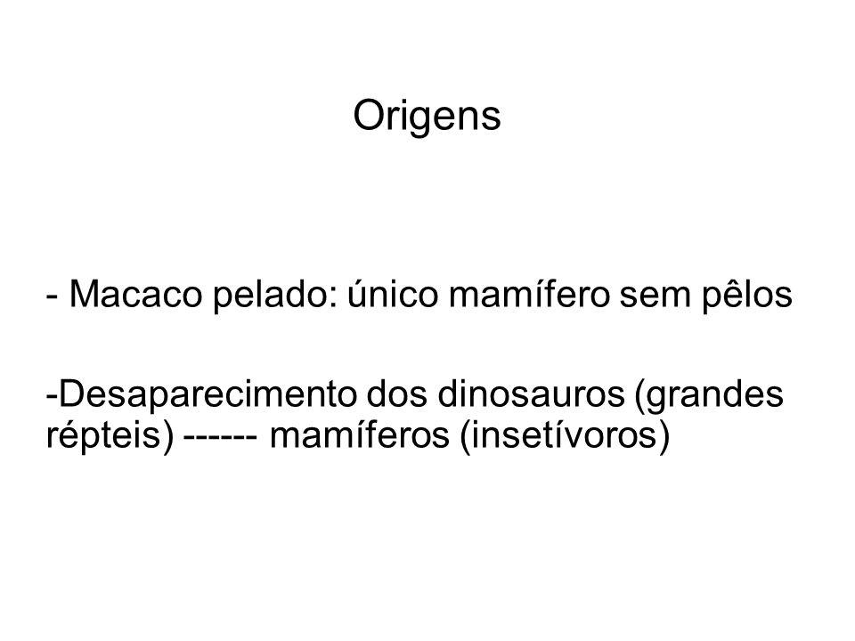Origens Macaco pelado: único mamífero sem pêlos