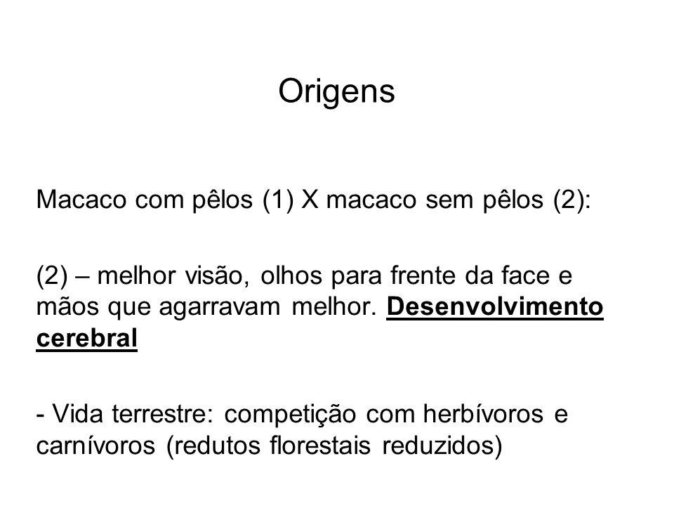 Origens Macaco com pêlos (1) X macaco sem pêlos (2):