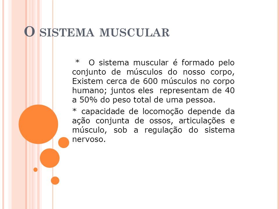 O sistema muscular