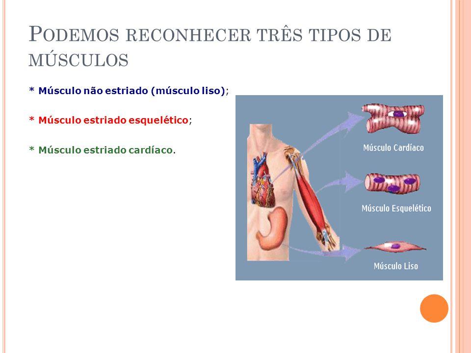 Podemos reconhecer três tipos de músculos