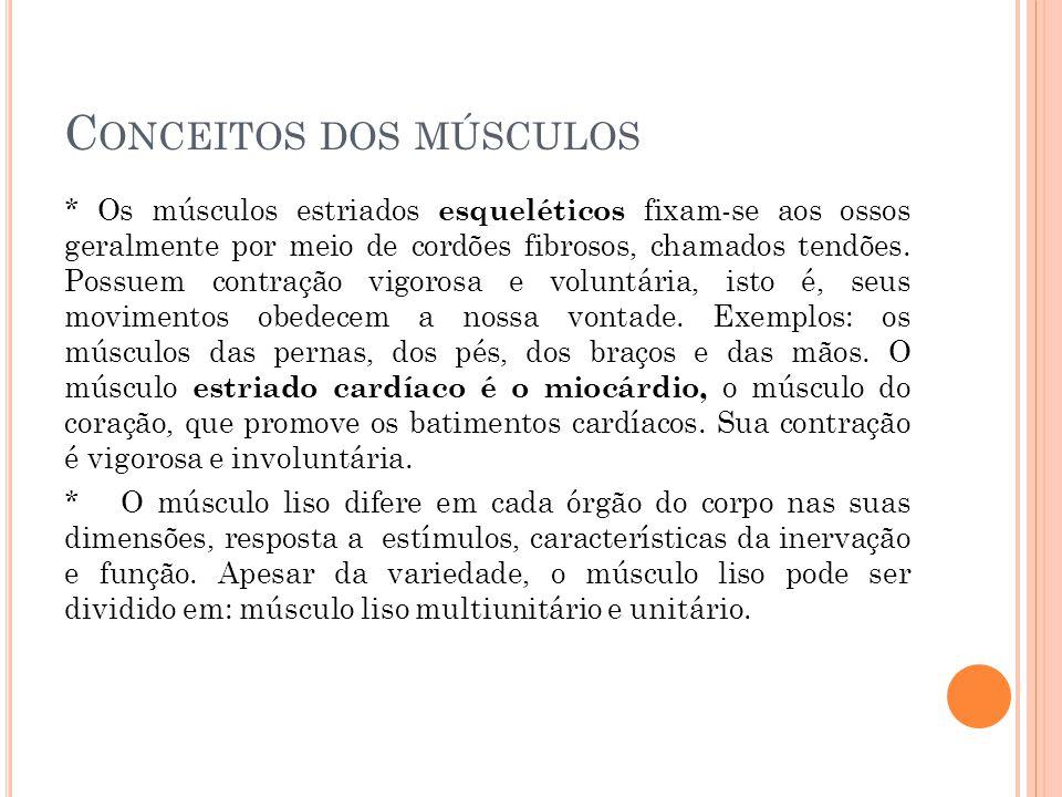 Conceitos dos músculos