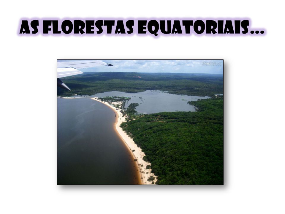 As florestas equatoriais…
