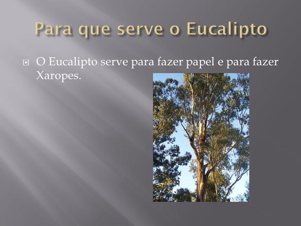 Para que serve o Eucalipto