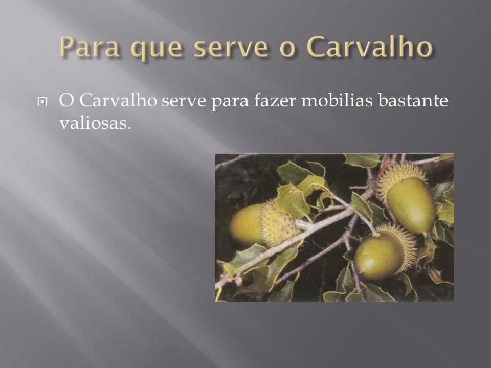 Para que serve o Carvalho