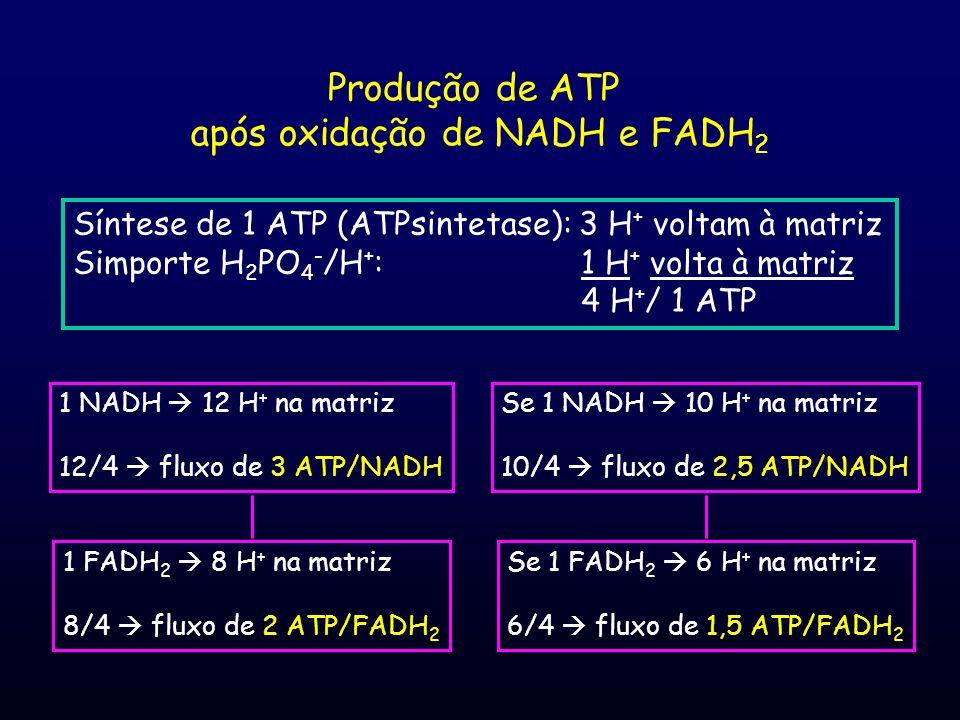 após oxidação de NADH e FADH2