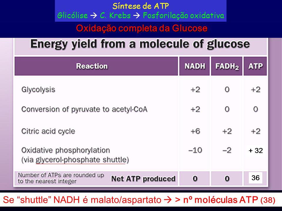 Glicólise  C. Krebs  Fosforilação oxidativa
