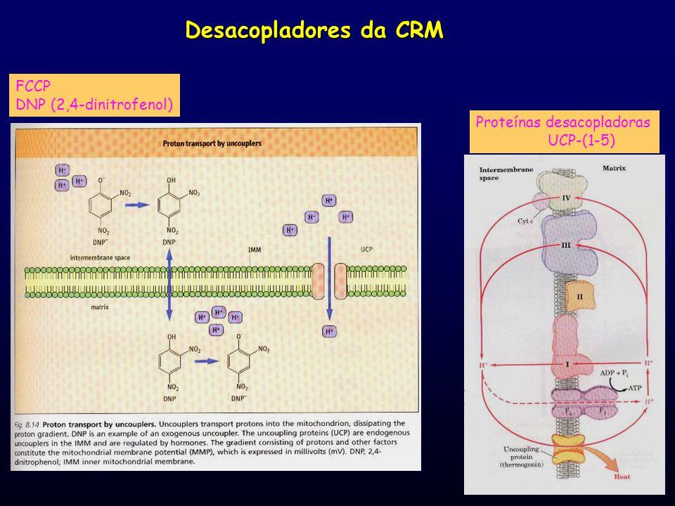 Desacopladores da CRM FCCP DNP (2,4-dinitrofenol)