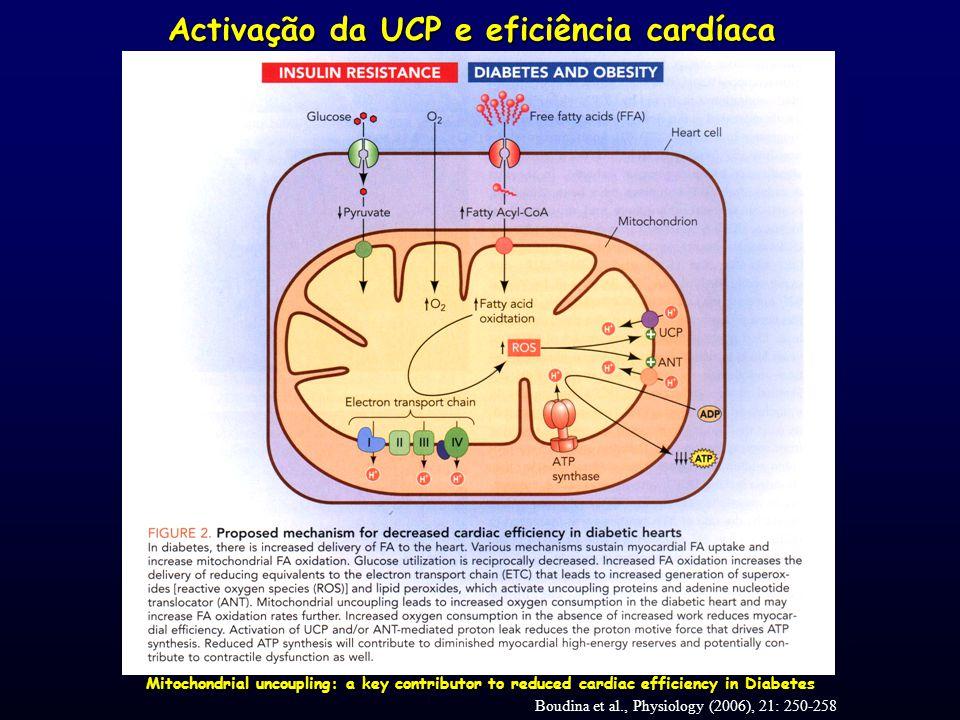 Activação da UCP e eficiência cardíaca