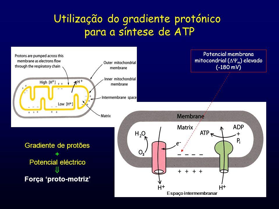 Utilização do gradiente protónico para a síntese de ATP