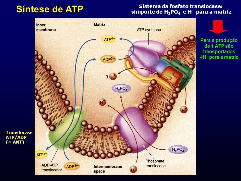 Síntese de ATP Sistema da fosfato translocase: