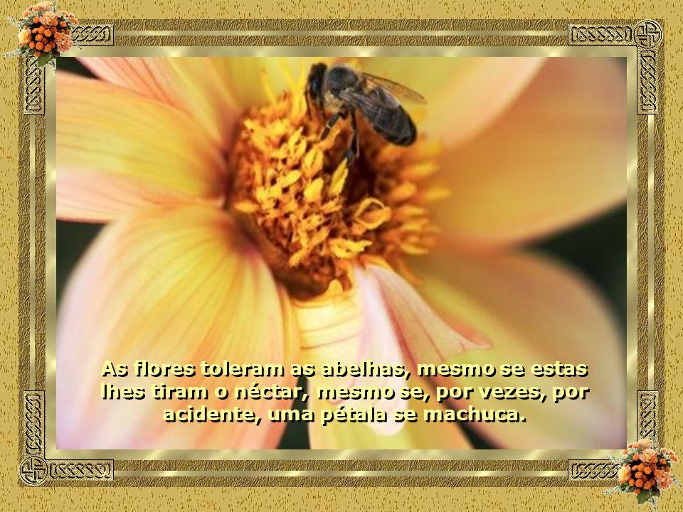 As flores toleram as abelhas, mesmo se estas lhes tiram o néctar, mesmo se, por vezes, por acidente, uma pétala se machuca.