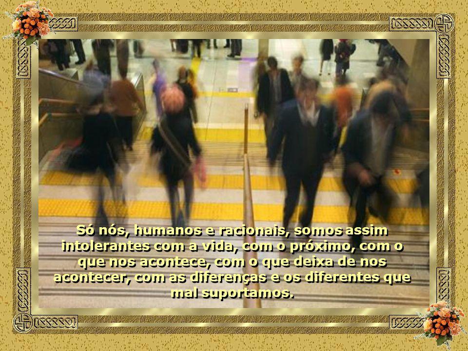 Só nós, humanos e racionais, somos assim intolerantes com a vida, com o próximo, com o que nos acontece, com o que deixa de nos acontecer, com as diferenças e os diferentes que mal suportamos.