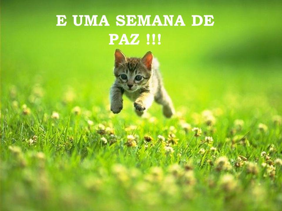 E UMA SEMANA DE PAZ !!!