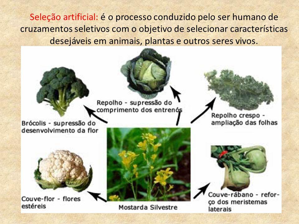 Seleção artificial: é o processo conduzido pelo ser humano de cruzamentos seletivos com o objetivo de selecionar características desejáveis em animais, plantas e outros seres vivos.