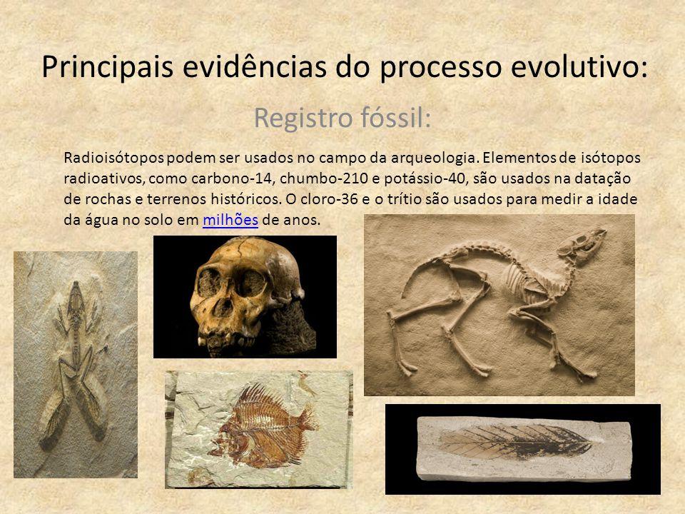 Principais evidências do processo evolutivo: