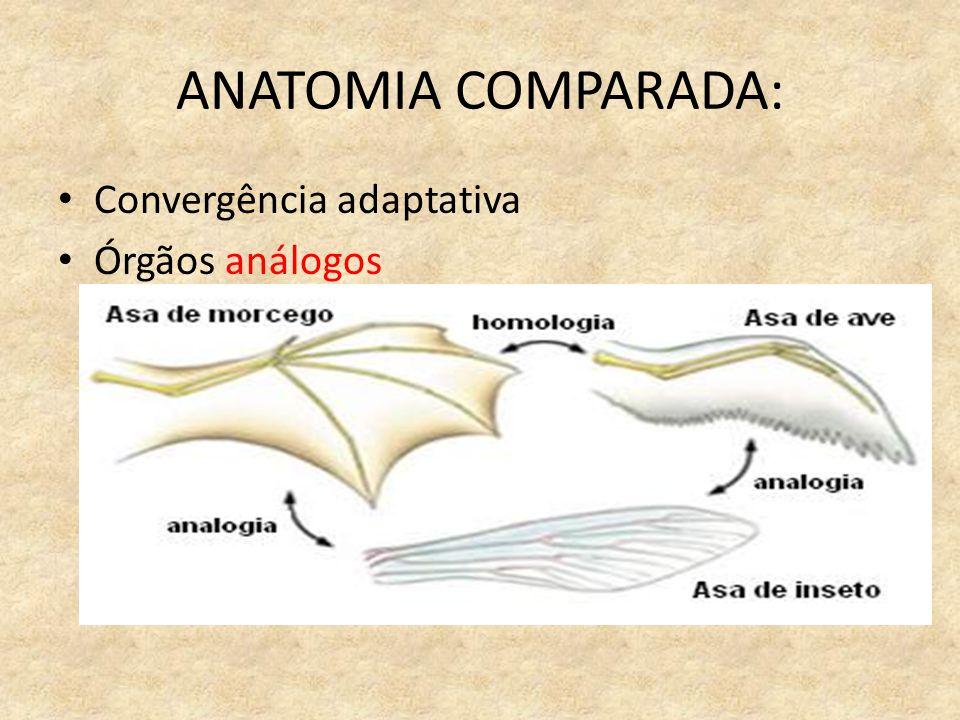 ANATOMIA COMPARADA: Convergência adaptativa Órgãos análogos
