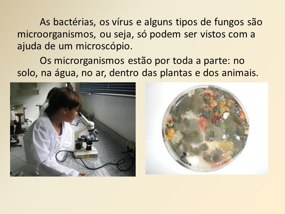 As bactérias, os vírus e alguns tipos de fungos são microorganismos, ou seja, só podem ser vistos com a ajuda de um microscópio.