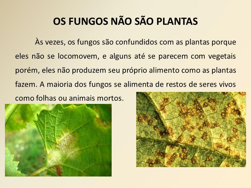 OS FUNGOS NÃO SÃO PLANTAS