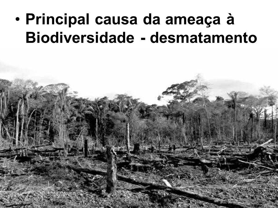 Principal causa da ameaça à Biodiversidade - desmatamento