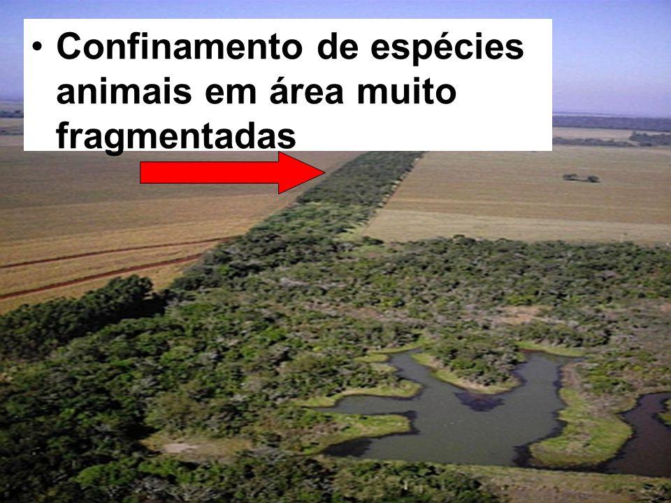 Confinamento de espécies animais em área muito fragmentadas