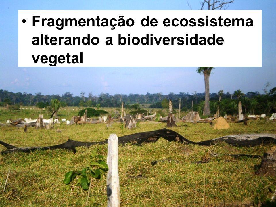 Fragmentação de ecossistema alterando a biodiversidade vegetal
