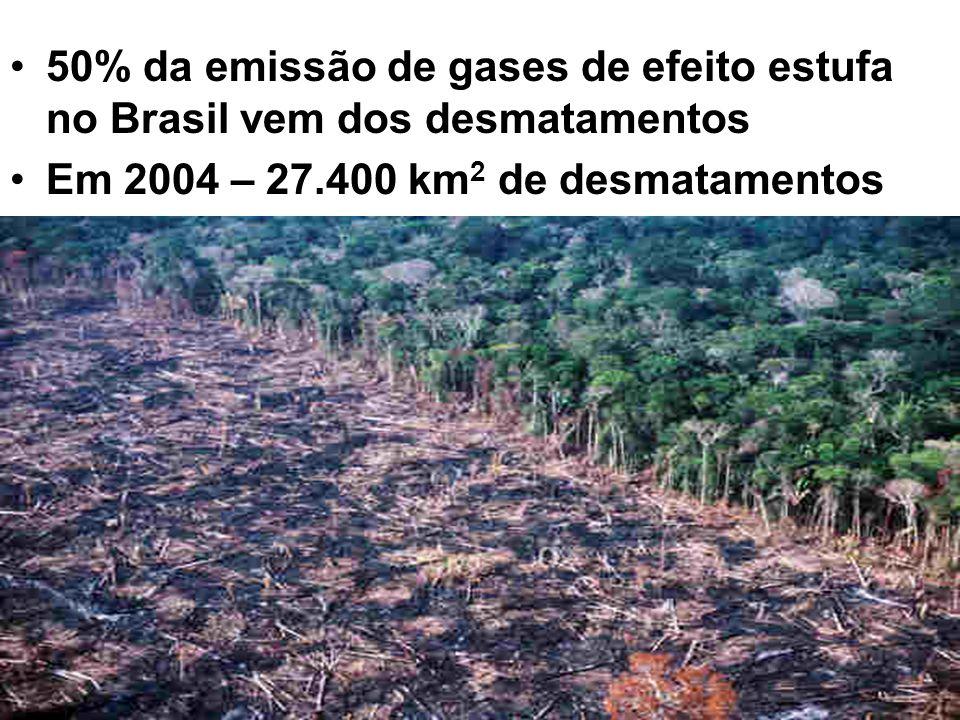 50% da emissão de gases de efeito estufa no Brasil vem dos desmatamentos