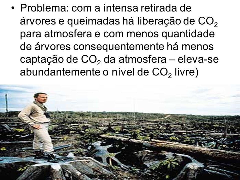Problema: com a intensa retirada de árvores e queimadas há liberação de CO2 para atmosfera e com menos quantidade de árvores consequentemente há menos captação de CO2 da atmosfera – eleva-se abundantemente o nível de CO2 livre)