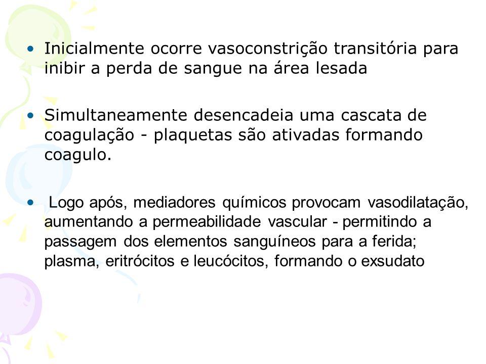 Inicialmente ocorre vasoconstrição transitória para inibir a perda de sangue na área lesada