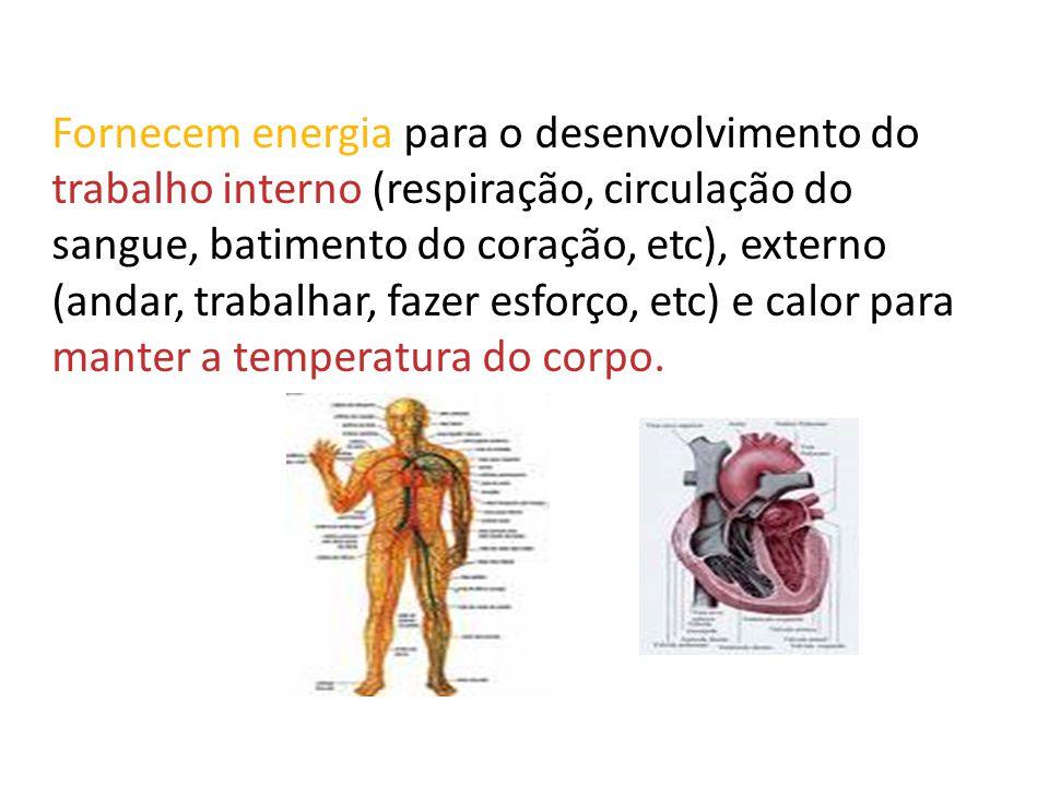 Fornecem energia para o desenvolvimento do trabalho interno (respiração, circulação do sangue, batimento do coração, etc), externo (andar, trabalhar, fazer esforço, etc) e calor para manter a temperatura do corpo.