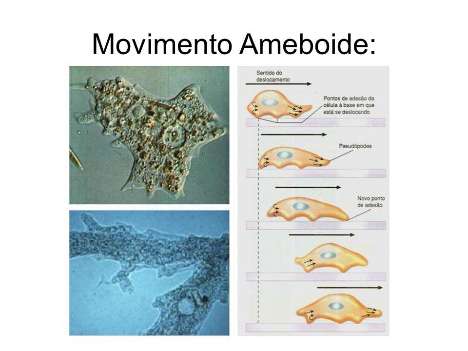 Movimento Ameboide: