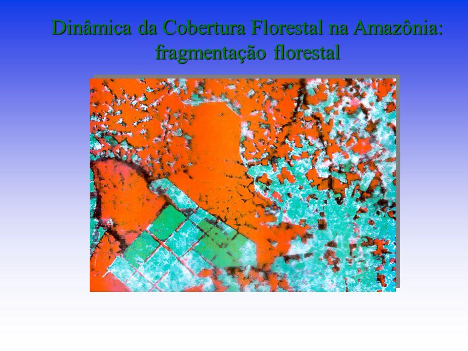 Dinâmica da Cobertura Florestal na Amazônia: fragmentação florestal
