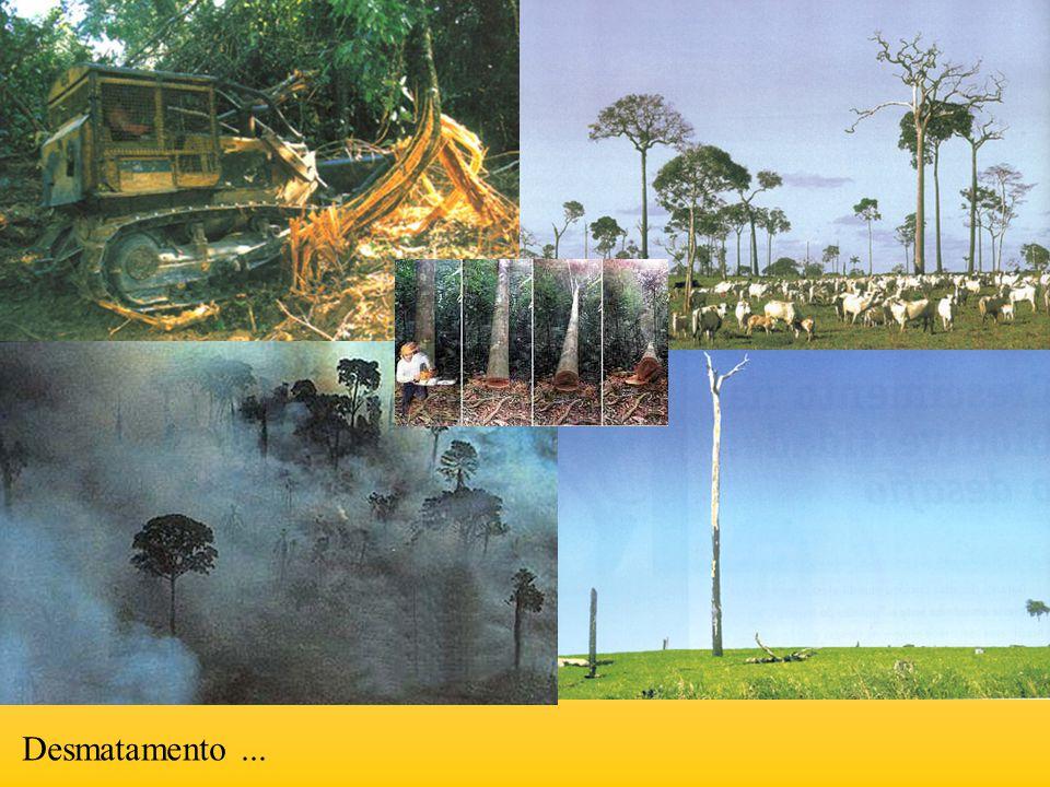 Nos últimos 30 anos. Desmatamento ...