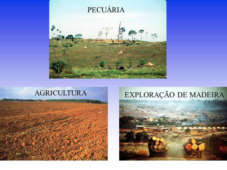 PECUÁRIA AGRICULTURA EXPLORAÇÃO DE MADEIRA