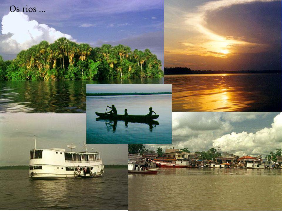Os rios ... ...permitir que os nossos filhos e netos possam enxergar a Amazônia…