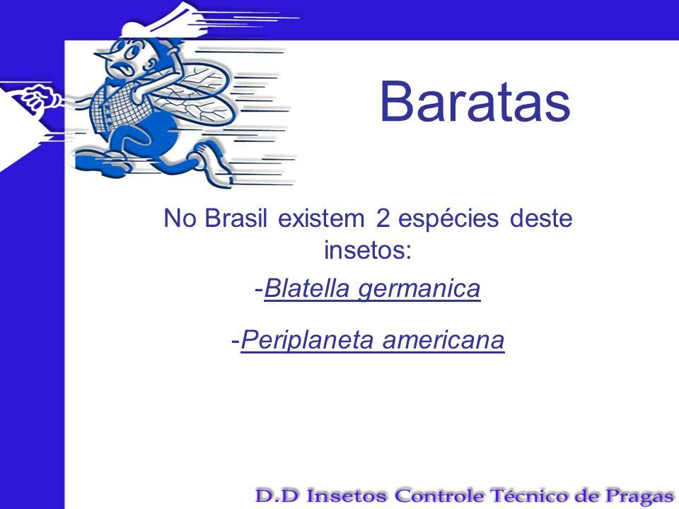 Baratas No Brasil existem 2 espécies deste insetos: Blatella germanica