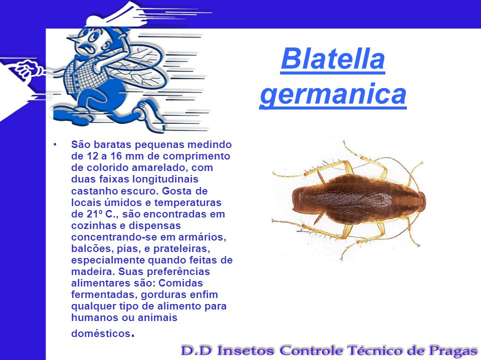 Blatella germanica