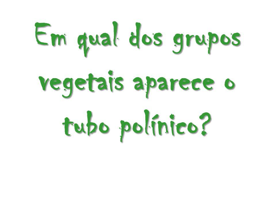 Em qual dos grupos vegetais aparece o tubo polínico