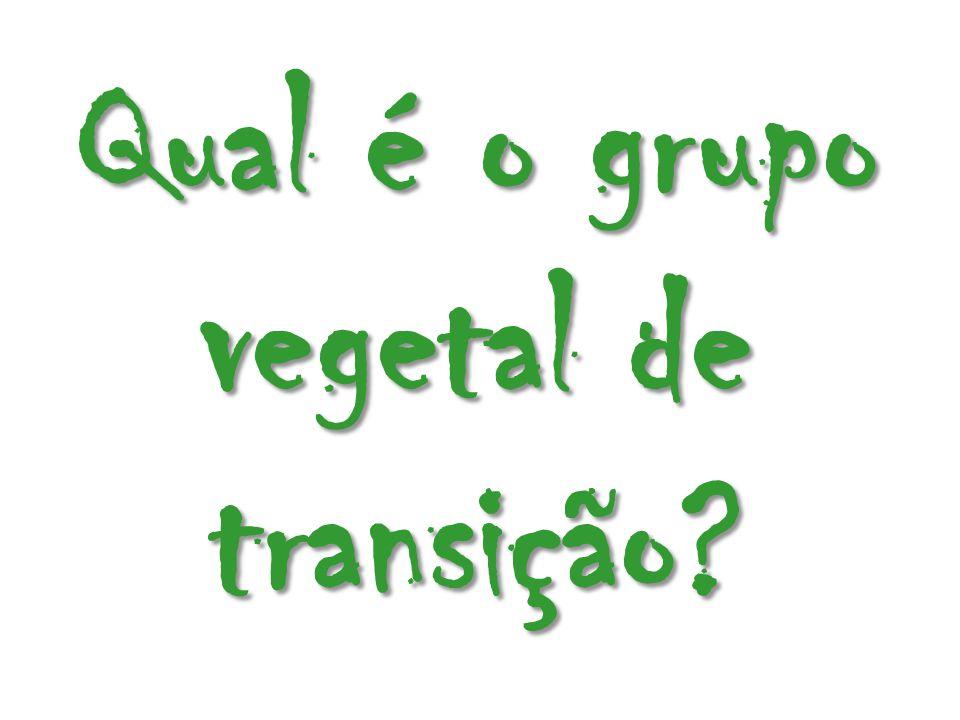 Qual é o grupo vegetal de transição