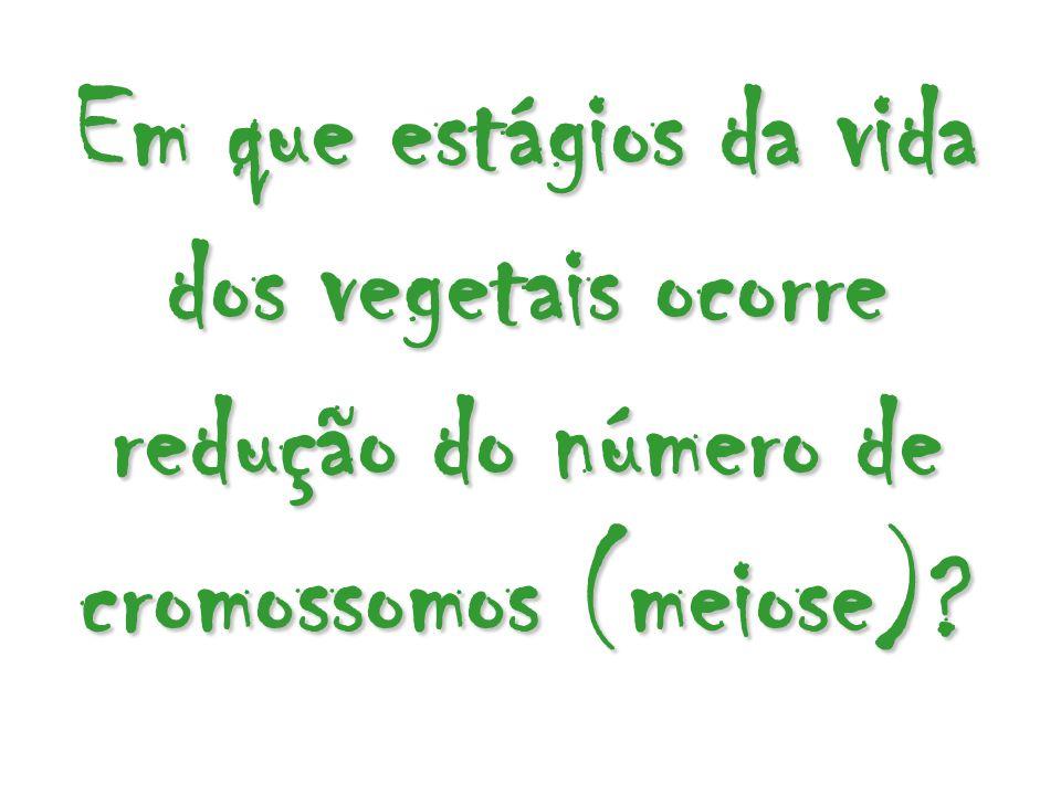 Em que estágios da vida dos vegetais ocorre redução do número de cromossomos (meiose)