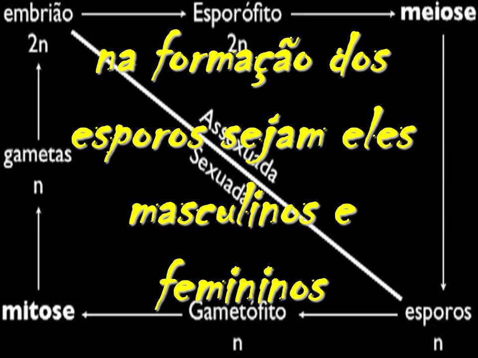 na formação dos esporos sejam eles masculinos e femininos