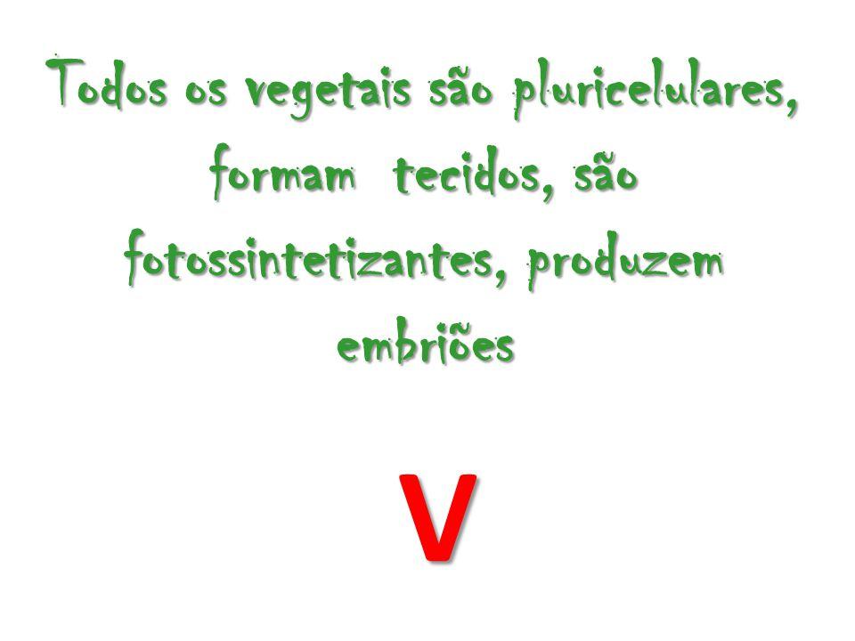 Todos os vegetais são pluricelulares, formam tecidos, são fotossintetizantes, produzem embriões