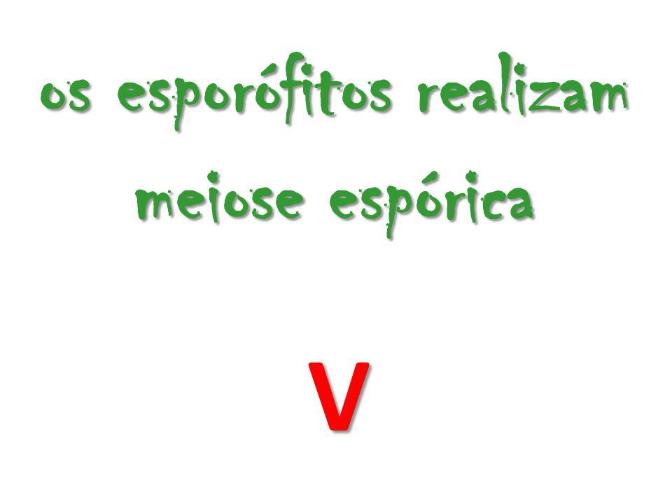 os esporófitos realizam meiose espórica