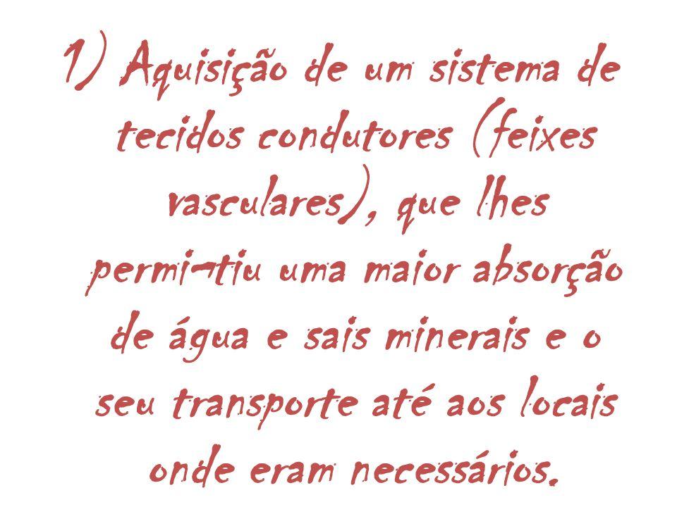 1) Aquisição de um sistema de tecidos condutores (feixes vasculares), que lhes permi¬tiu uma maior absorção de água e sais minerais e o seu transporte até aos locais onde eram necessários.