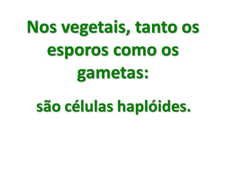 Nos vegetais, tanto os esporos como os gametas: