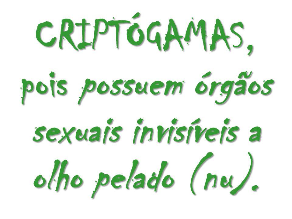 CRIPTÓGAMAS, pois possuem órgãos sexuais invisíveis a olho pelado (nu).