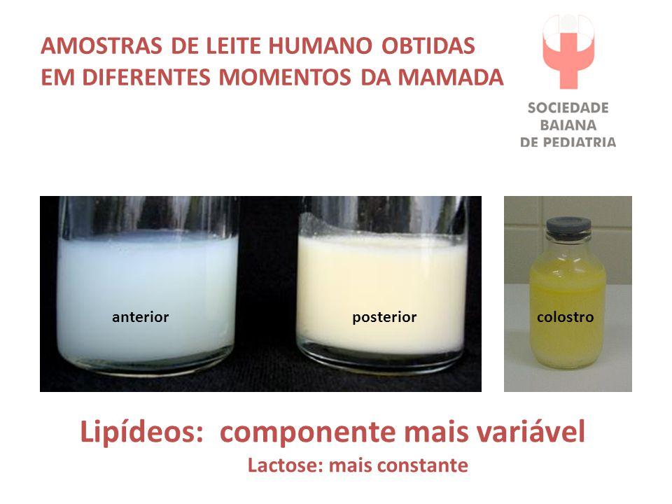 Amostras de leite humano obtidas em diferentes momentos da mamada