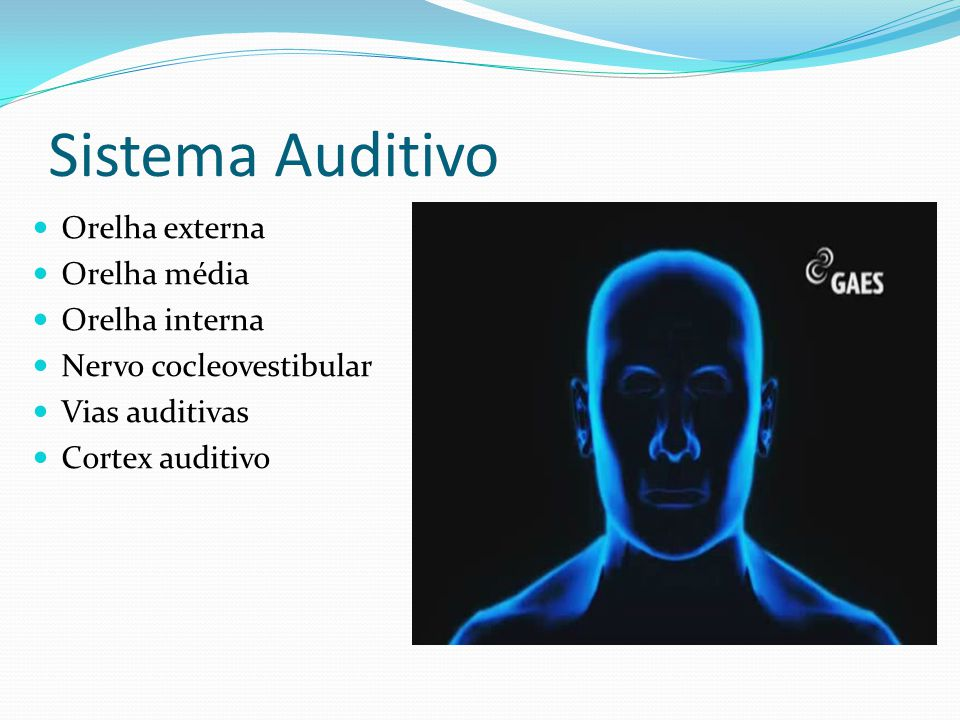 Sistema Auditivo Orelha externa Orelha média Orelha interna