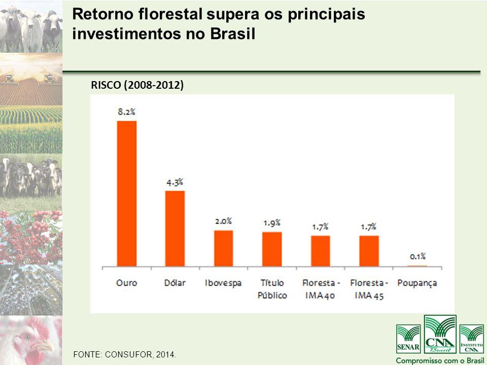 Retorno florestal supera os principais investimentos no Brasil