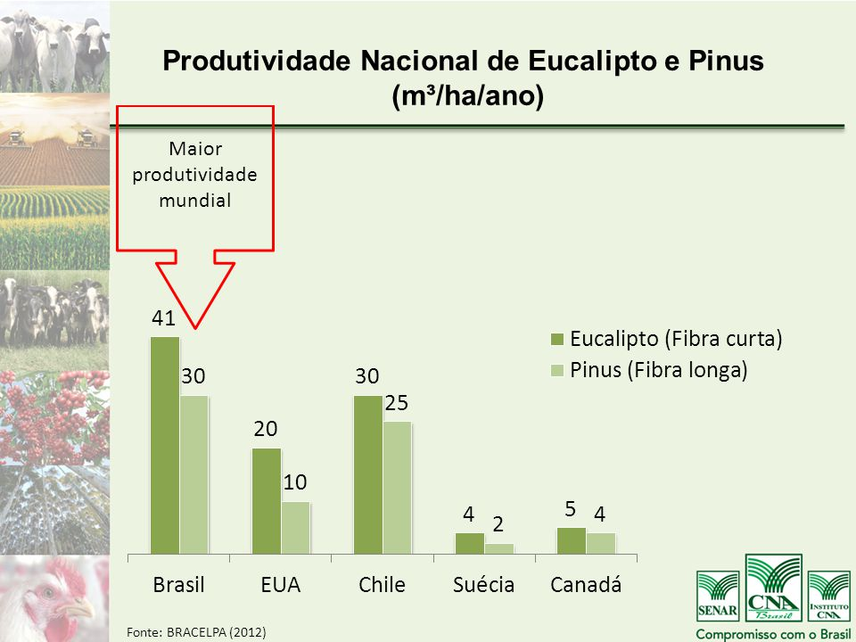 Produtividade Nacional de Eucalipto e Pinus